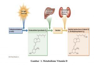 Proses terbentuknya vitamin D di dalam tubuh